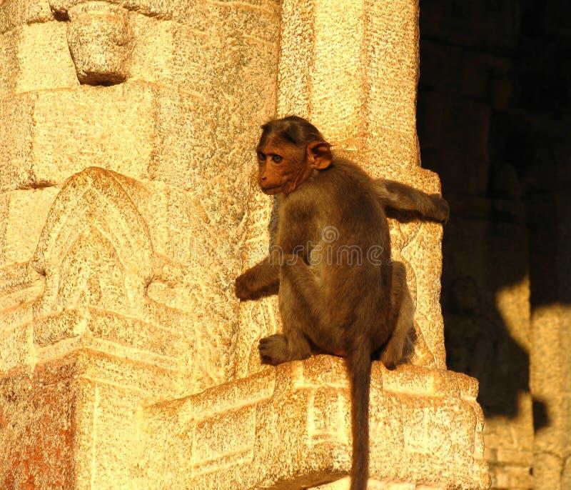 Macaco na parede de um templo fotografia de stock