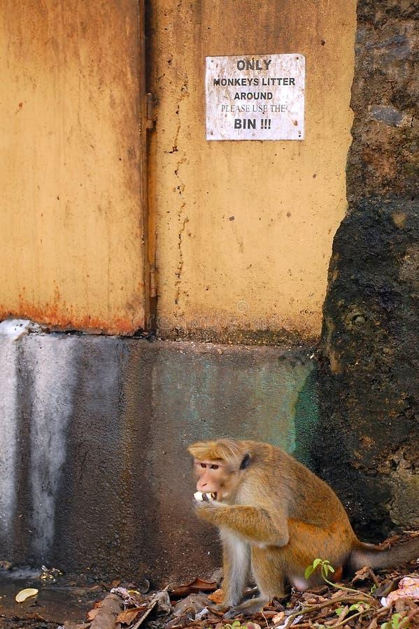 Macaco na pilha do lixo imagem de stock royalty free