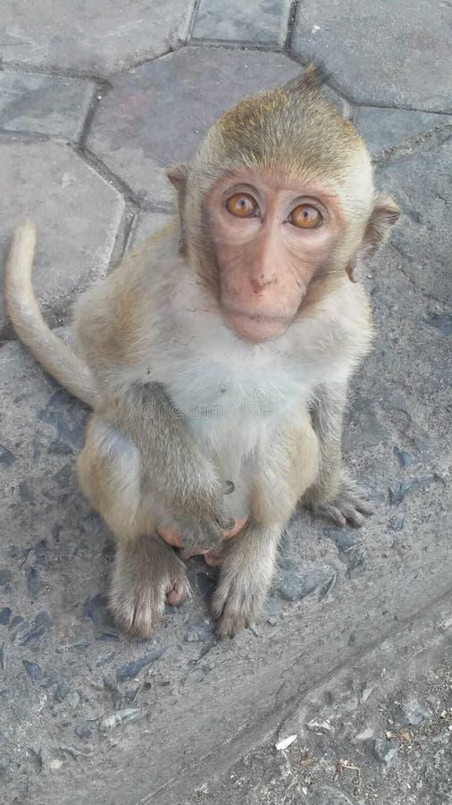 Macaco na rua em Lopburi, Tailândia imagens de stock