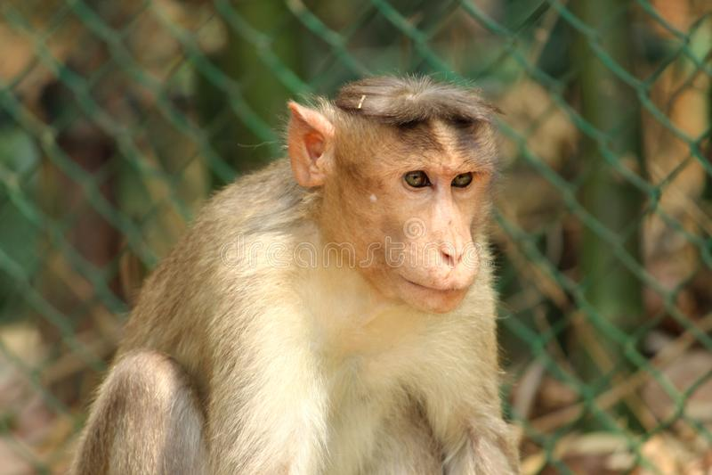 Macaco no jardim zoológico foto de stock royalty free