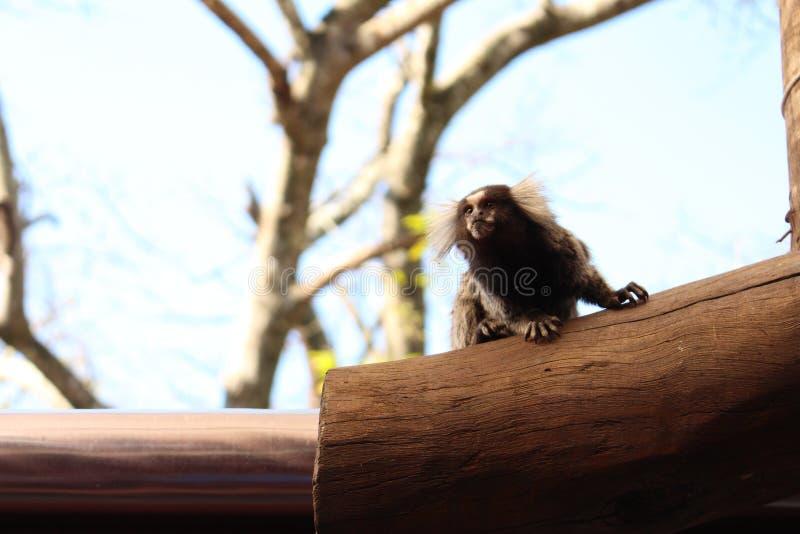 macaco no tronco de árvore imagens de stock