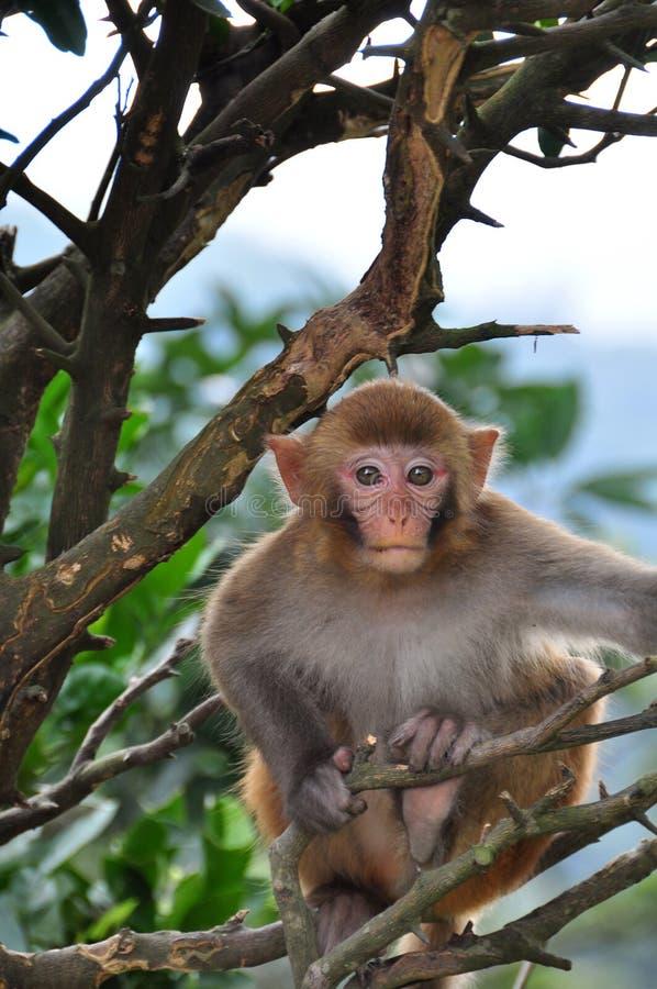 Macaco novo na árvore foto de stock