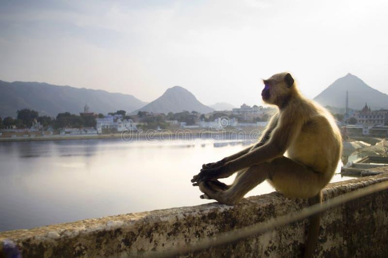 Macaco pensativo que senta-se na frente do lago pushkar em rajasthan, dentro fotografia de stock