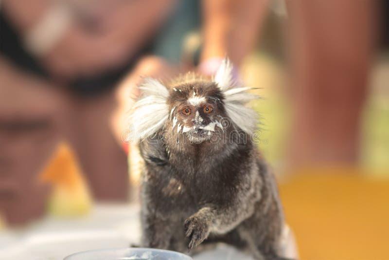 Macaco pequeno imagens de stock royalty free