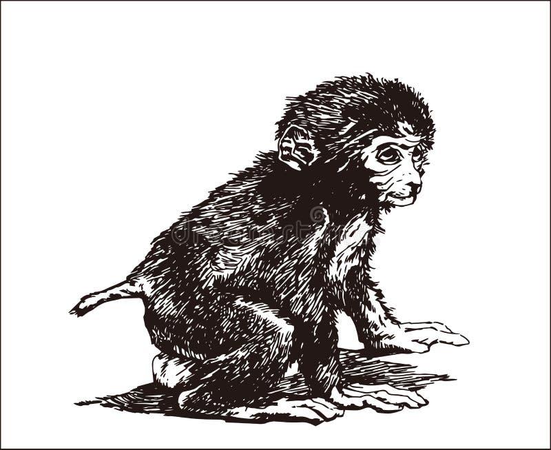 Macaco pequeno ilustração royalty free