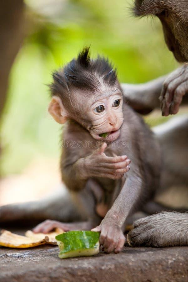 Macaco pequeno bonito do bebê fotos de stock