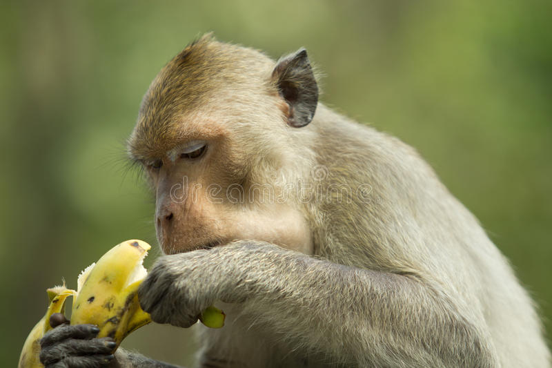 Download Macaco imagem de stock. Imagem de fora, filial, expressão - 29839467