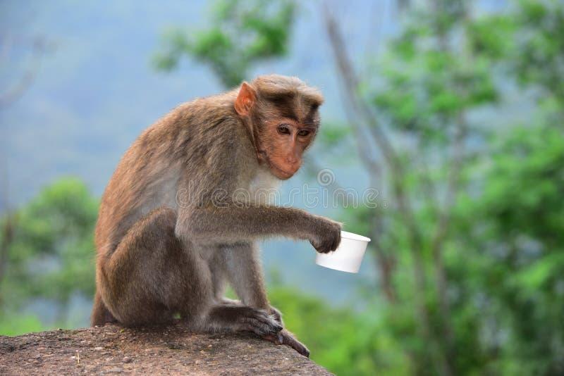 Macaco que guarda um copo de chá imagens de stock royalty free