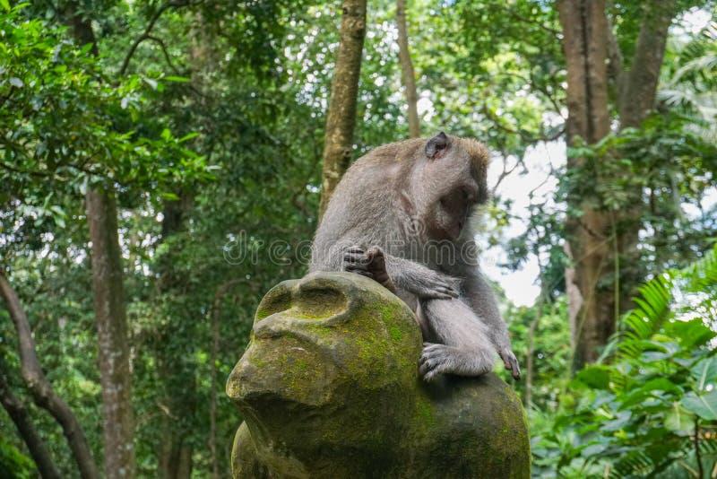 Macaco que senta-se em uma escultura de pedra na floresta sagrado do macaco em Ubud, ilha Bali, Indonésia fotografia de stock royalty free