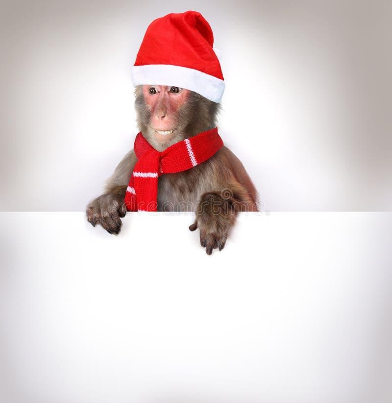 Macaco Santa Claus que guarda a bandeira do Natal fotografia de stock