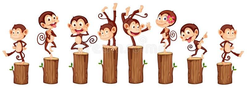 macacos ilustração royalty free