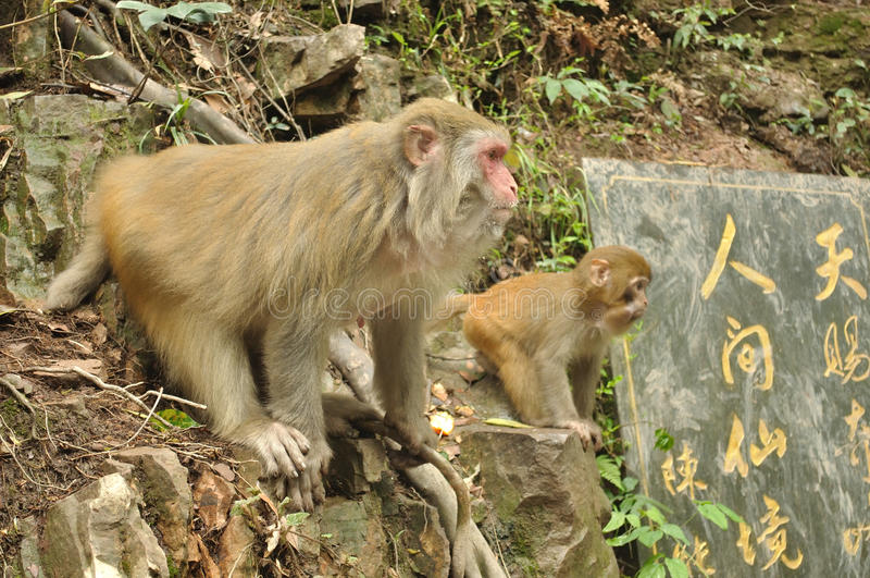 Download Macacos na linha foto de stock. Imagem de macacos, linha - 26500338