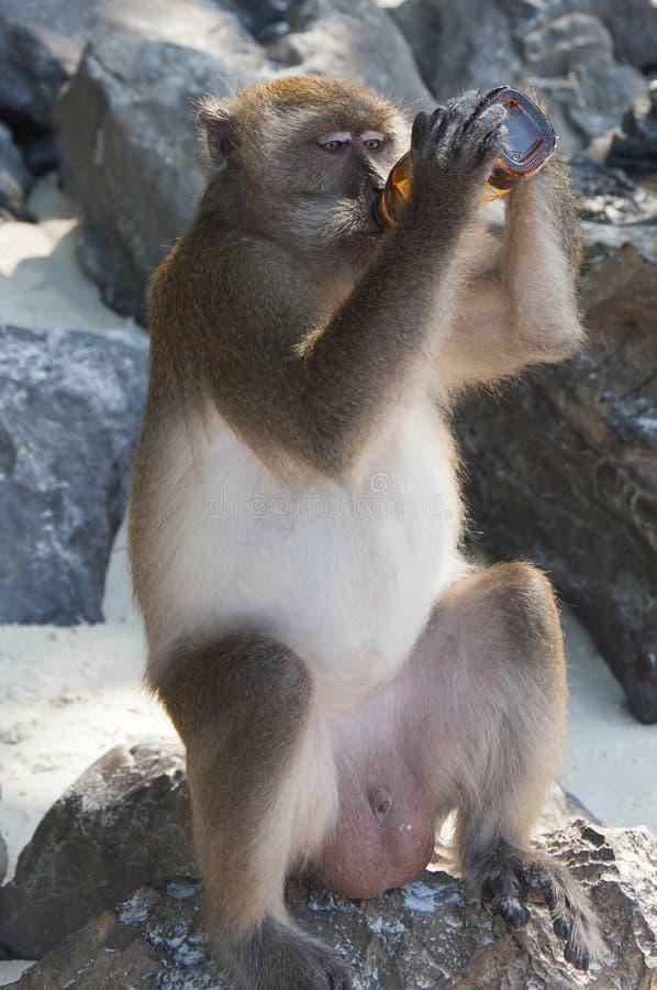 Macacos nas praias de Tailândia fotografia de stock royalty free