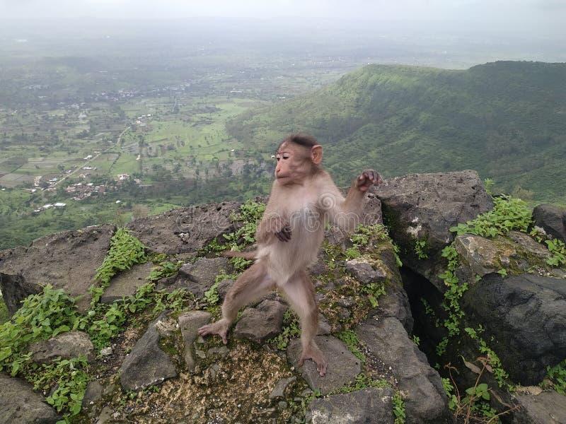 Macacos numa árvore imagens de stock royalty free