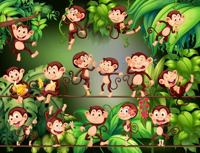 Macacos que fazem coisas diferentes na selva ilustração royalty free