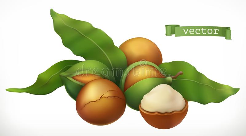 macadâmia ícone realístico do vetor 3d ilustração stock