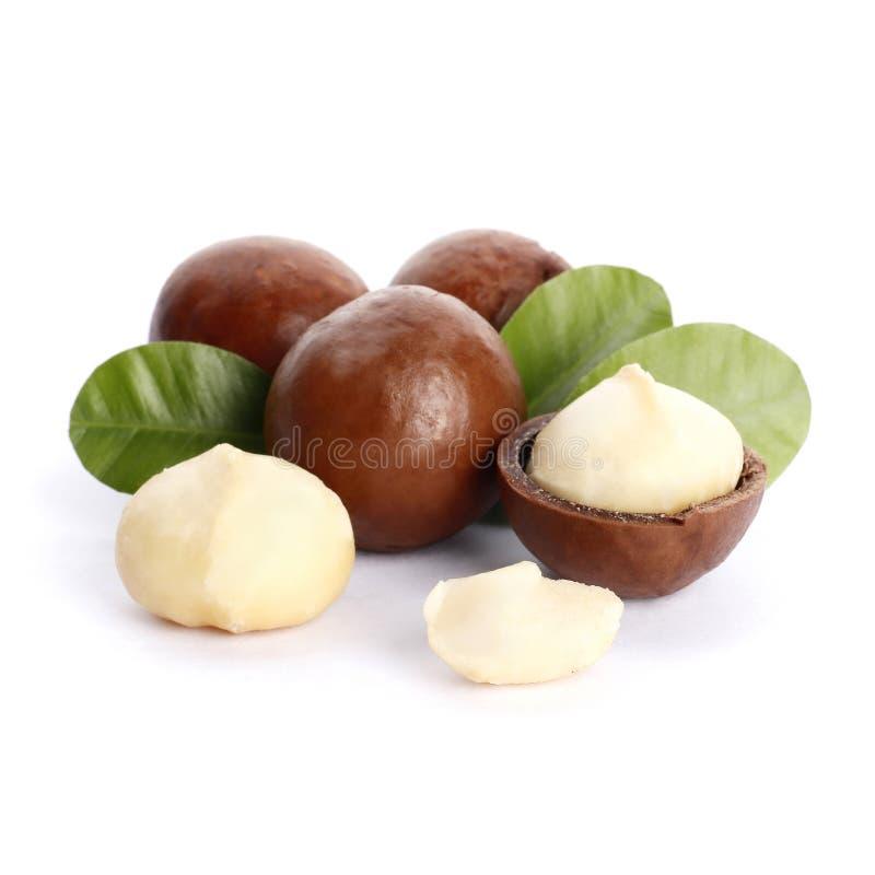 Macadamia καρύδια και πράσινο φύλλο που απομονώνονται στο άσπρο υπόβαθρο στοκ φωτογραφίες με δικαίωμα ελεύθερης χρήσης