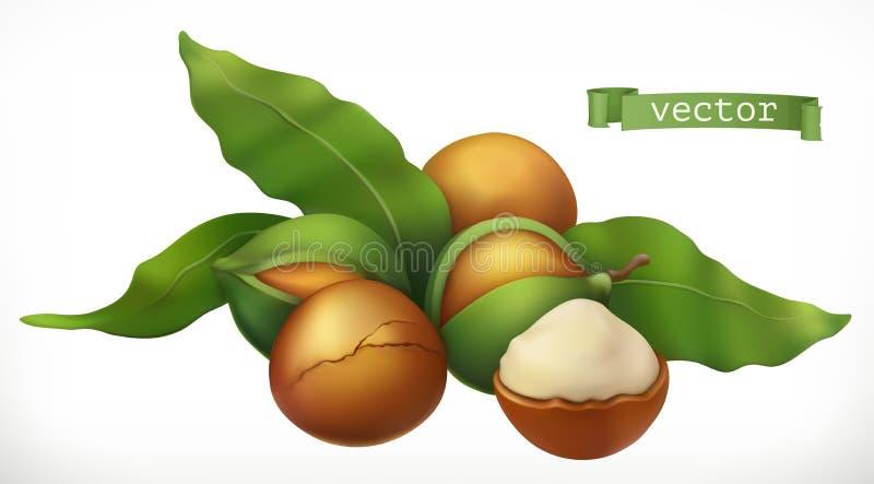 macadamia реалистический значок вектора 3d иллюстрация штока