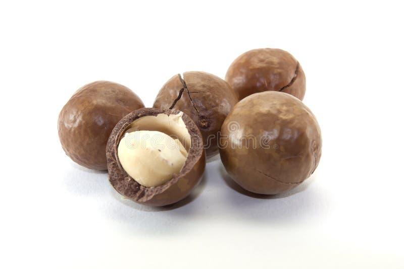 macadamia arkivfoton