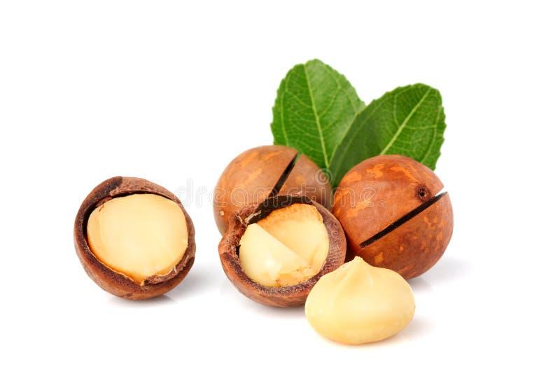 Macadamia dokrętki z liściem odizolowywającym zdjęcia royalty free