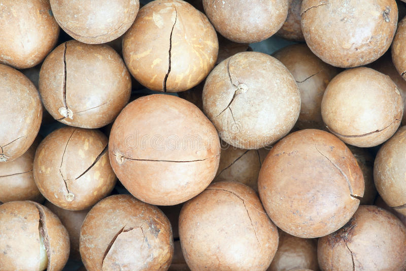 Download Macadamia Fruits Royalty Free Stock Photos - Image: 28782698