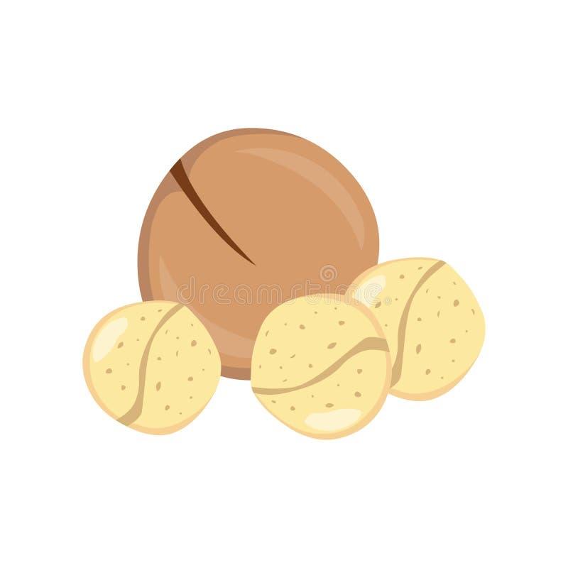 macadamia Illustrazione del vettore della noce di macadamia illustrazione vettoriale