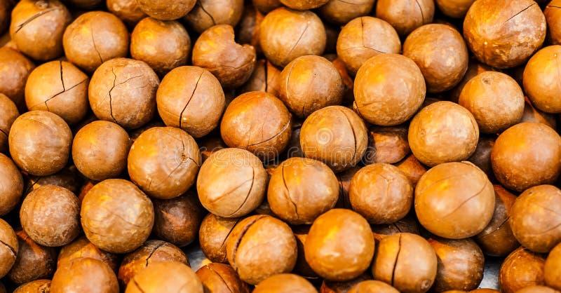 Macadamia-Nüsse australisch stockbild