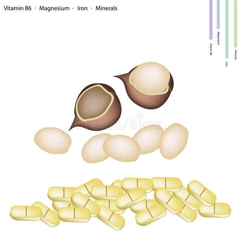 Macadamia-Nüsse mit Vitamin B6, Magnesium und Eisen vektor abbildung
