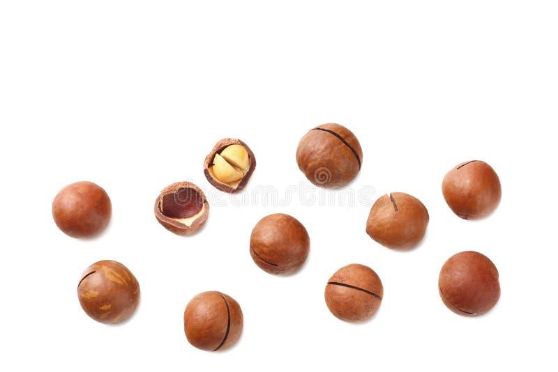 Macadamia noot die op een witte achtergrond wordt ge?soleerd Hoogste mening royalty-vrije stock foto's
