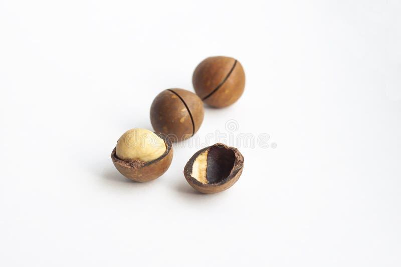 Macadamia noot, notedop op de witte achtergrond royalty-vrije stock afbeelding