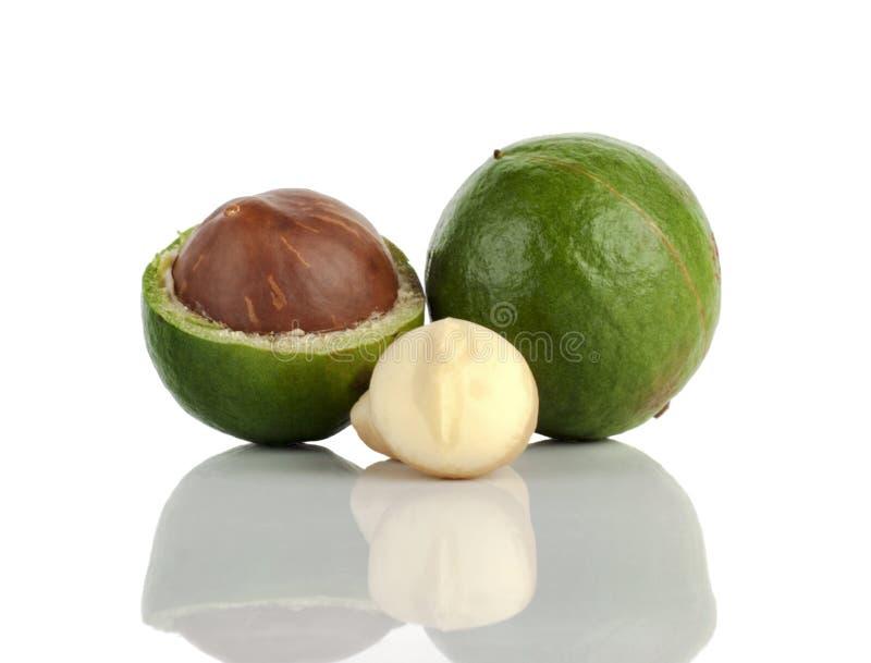 macadamia noot op witte achtergrond royalty-vrije stock afbeeldingen