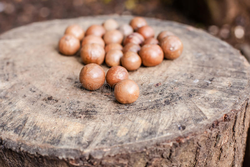 Macadamia noten stock afbeelding