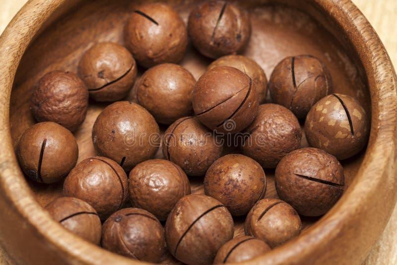Macadamia noten - Macadamia integrifolia royalty-vrije stock foto