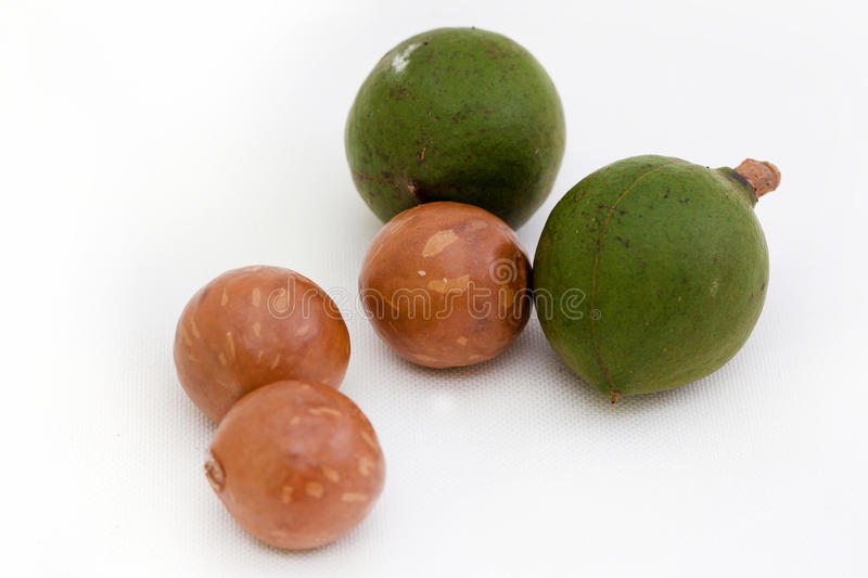 Download Macadamia Nut stock image. Image of food, drink, plant - 15861493