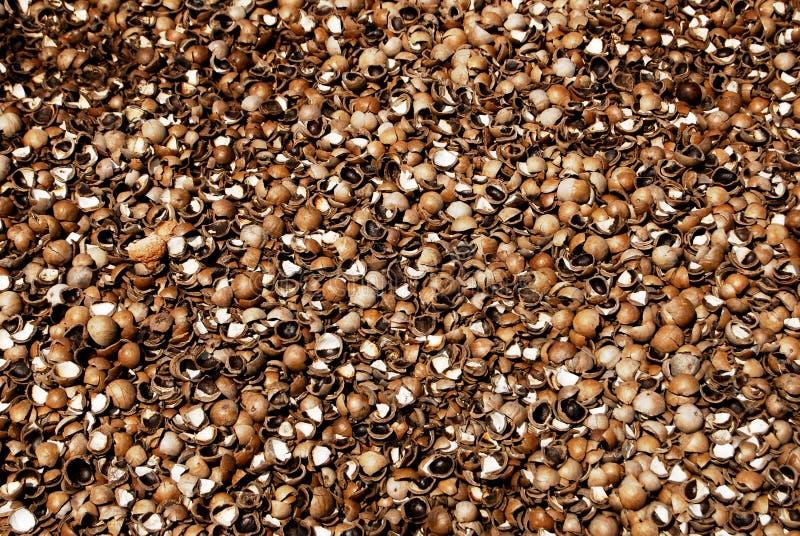 Download Macadamia Nut Shells stock photo. Image of shell, dietary - 11458928