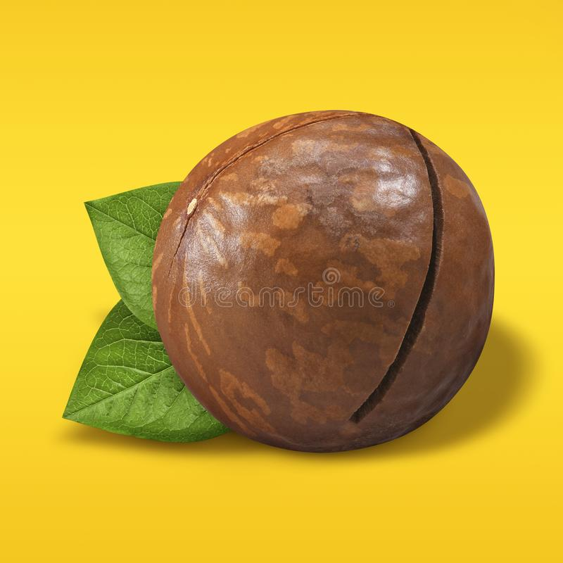 Macadamia nut unpeeled on pastel yellow and orange background. Closeup one macadamia nut in shell with green leaves as. Package design element. Organic nuts stock image