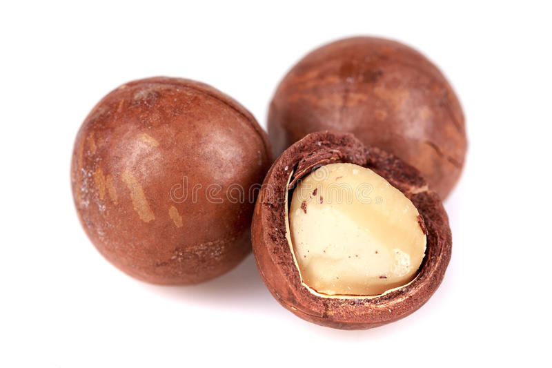 Download Macadamia nuts stock photo. Image of open, crunch, nutcracker - 36227642