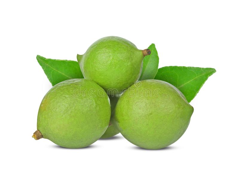 Macadamia nuts  isolated  on white background royalty free stock photo