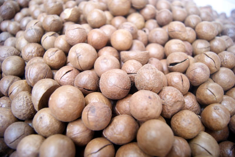 Download Macadamia nuts stock image. Image of agricultural, features - 36704375