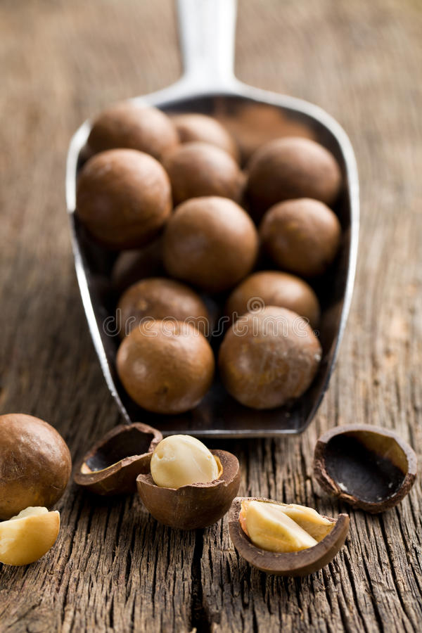 Download Macadamia nuts on scoop stock photo. Image of paddle - 35995372