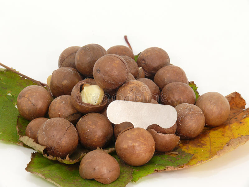 Download Macadamia stock image. Image of nutshell, december, autumn - 34836895