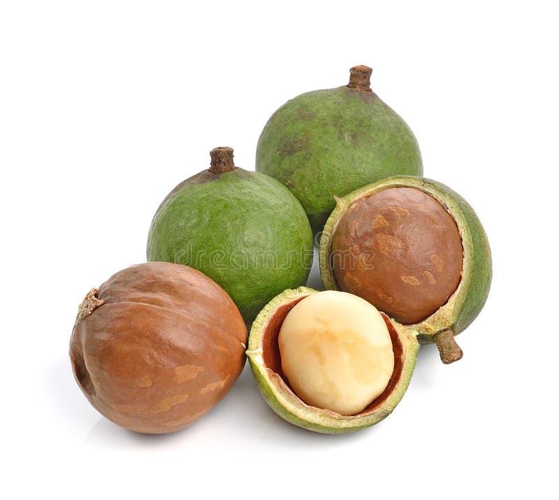 Macadamia nuts on white background stock photos