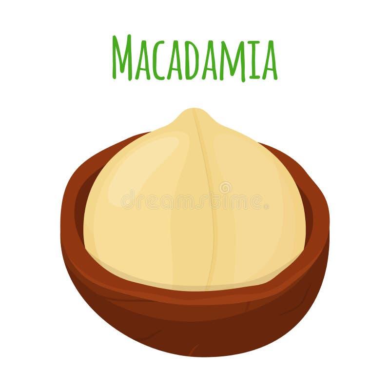 Macadamia orgánica, nuez de la nutrición, ingrediente del aceite Estilo plano Ilustración del vector stock de ilustración