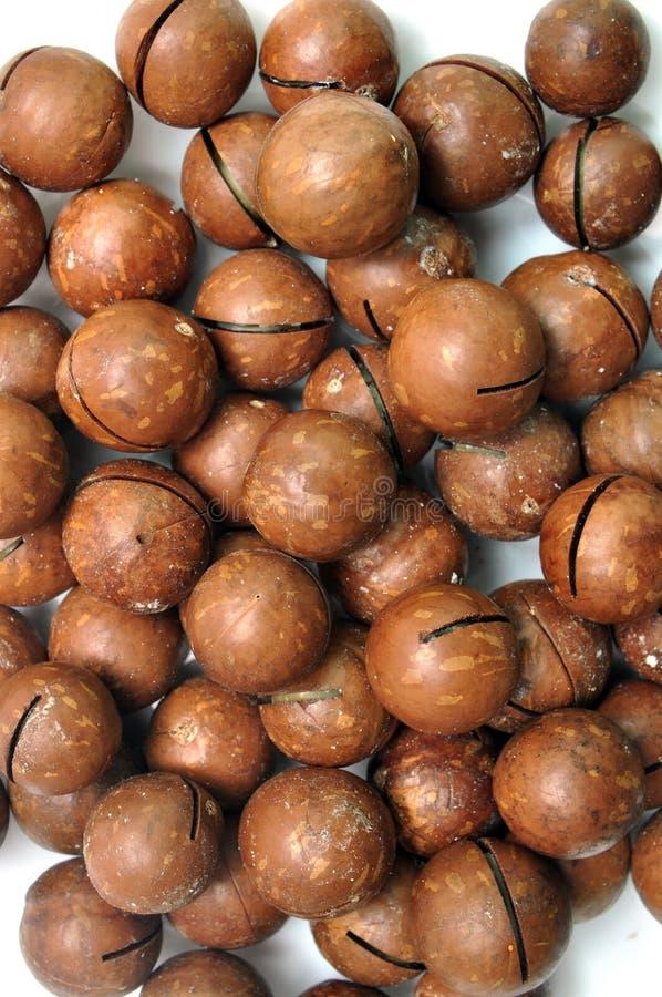 macadamias stock photography