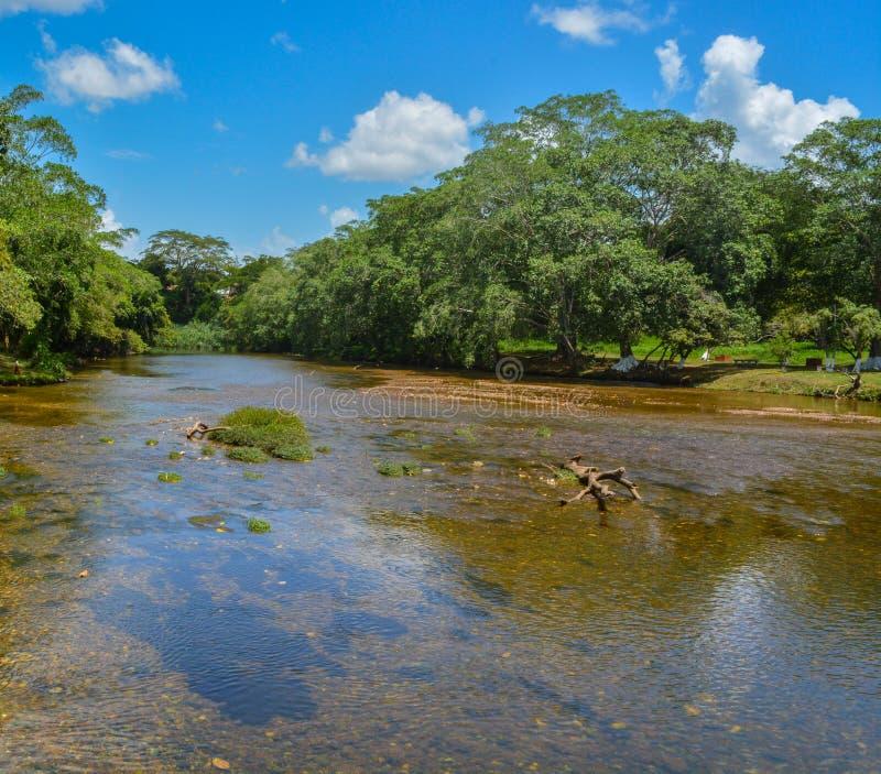 Macal flod som flödar till och med San Ignacio, Belize arkivfoton