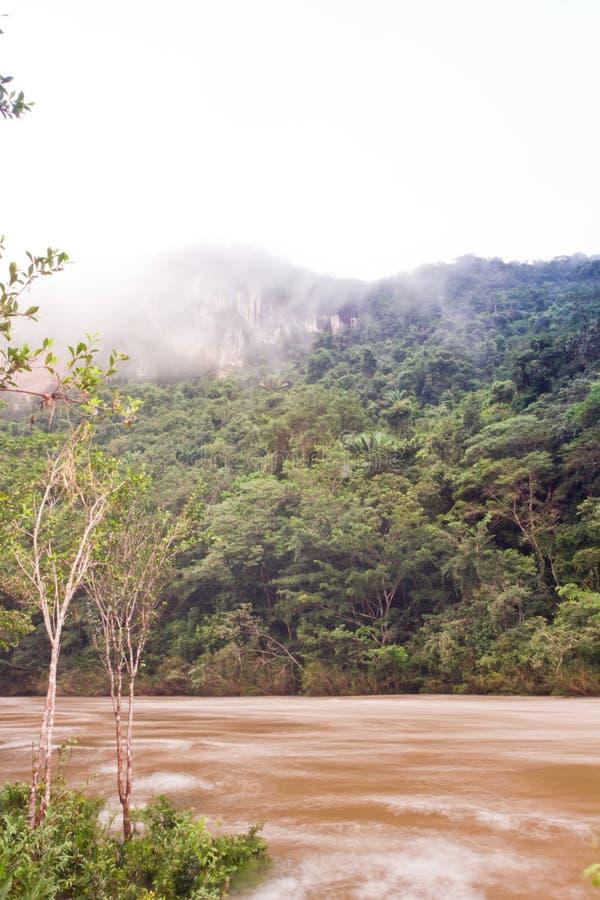 Macalrivier Belize stock foto's
