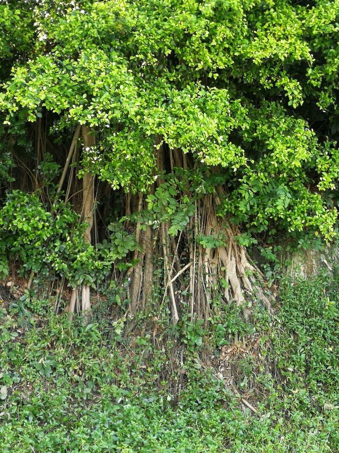 Macao Macau Cotai Ecology Zone nature fishing ponds fisherman fruit trees plantation. Macao Macau Cotai Ecology Zone nature fisherman fishing net fruit trees royalty free stock photos