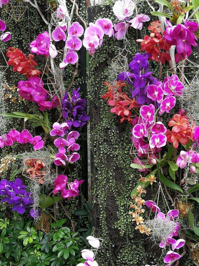 Macao ogródu wiosny orchidei okwitnięcia pokaz zdjęcie royalty free