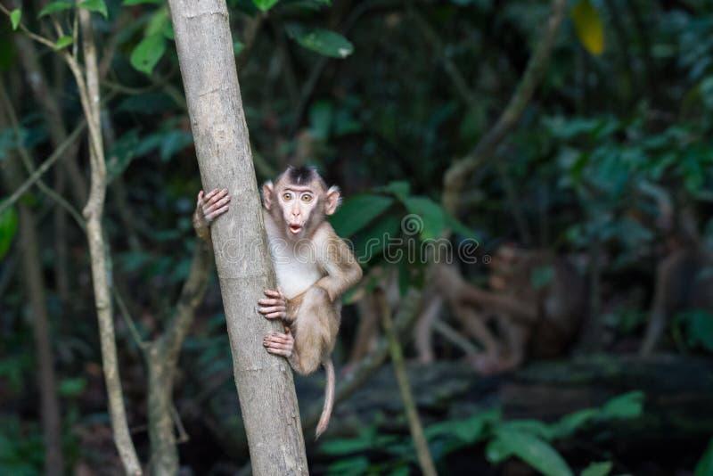 macaque стоковая фотография