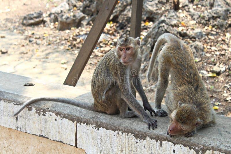 Macaque Monkies à la caverne de Khao Luang dans Petchaburi, Thaïlande photographie stock libre de droits